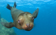 世界自然遺産の海 ラパス