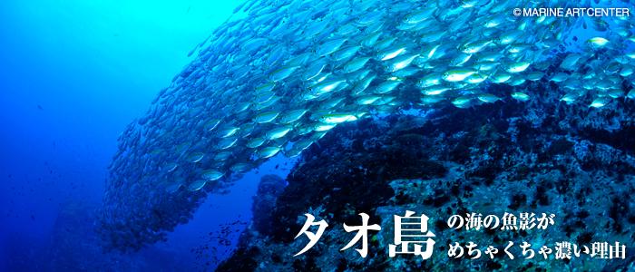 タオ島の海の魚影がめちゃくちゃ...