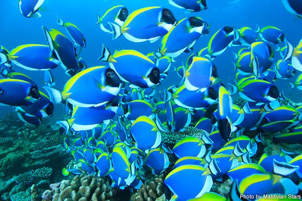 モルディブ | 現地の海から~水深別魚ッチング!~