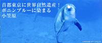 小笠原ガイド