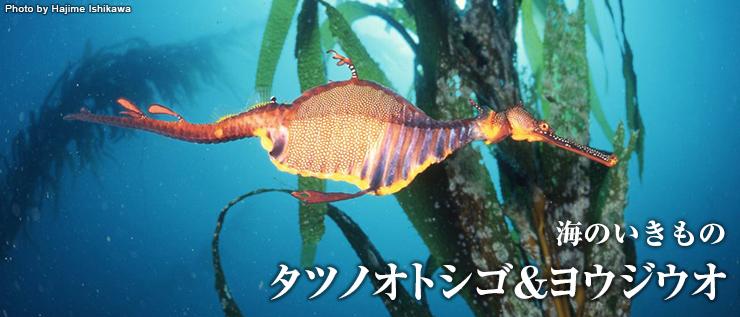 f446ecf37c3d 海のいきもの タツノオトシゴ&ヨウジウオ   海のいきもの   海の生き物 ...