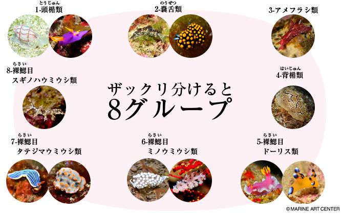 ウミウシの画像 p1_34