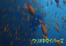 さすが田子!魚影を求めて外海2ボート!
