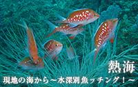 現地の海から~水深別魚ッチング!~ 熱海