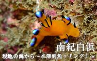 現地の海から~水深別魚ッチング!~ 南紀白浜