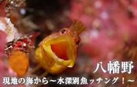 現地の海から~水深別魚ッチング!~ 八幡野