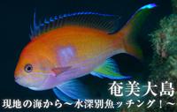 現地の海から~水深別魚ッチング!~ 奄美大島