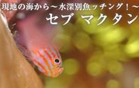 現地の海から~水深別魚ッチング!~ セブ・マクタン