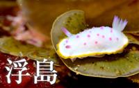 ウミウシ・ナイトが大人気! 浮島