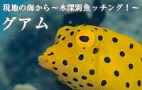 現地の海から~水深別魚ッチング!~ グアム