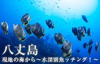 現地の海から~水深別魚ッチング!~ 八丈島