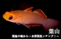 現地の海から~水深別魚ッチング!~ 葉山