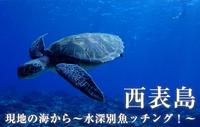 現地の海から~水深別魚ッチング!~ 西表島