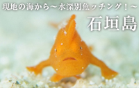 現地の海から~水深別魚ッチング!~ 石垣島