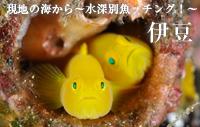 現地の海から~水深別魚ッチング!~ 伊豆