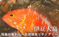 現地の海から~水深別魚ッチング!~ 伊豆大島