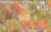 現地の海から~水深別魚ッチング!~ 柏島