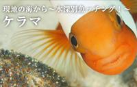 現地の海から~水深別魚ッチング!~ ケラマ