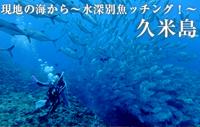 現地の海から~水深別魚ッチング!~ 久米島