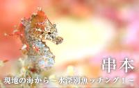 現地の海から~水深別魚ッチング!~ 串本