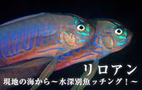 現地の海から~水深別魚ッチング!~ リロアン