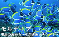 現地の海から~水深別魚ッチング!~ モルディブ