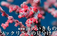海のいきもの 第5回 擬態編