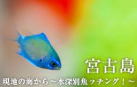 現地の海から~水深別魚ッチング!~ 宮古島