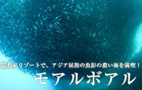 アジア屈指の魚影の濃い海を満喫!モアルボアル