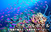 現地の海から~水深別魚ッチング!~ モアルボアル