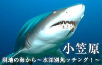現地の海から~水深別魚ッチング!~ 小笠原