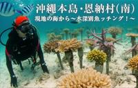 現地の海から~水深別魚ッチング!~ 沖縄本島・恩納村(南)
