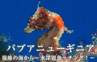 現地の海から~水深別魚ッチング!~ パプアニューギニア