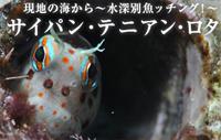 現地の海から~水深別魚ッチング!~ サイパン・テニアン・ロタ