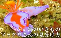 海のいきもの 第4回 ウミウシ編