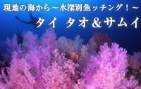 現地の海から~水深別魚ッチング!~ タイ タオ・サムイ