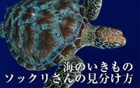 海のいきもの 第1回 ウミガメ