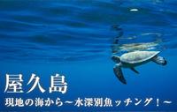 現地の海から~水深別魚ッチング!~ 屋久島