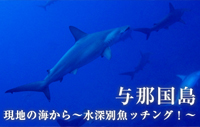 現地の海から~水深別魚ッチング!~ 与那国