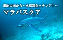 現地の海から~水深別魚ッチング!~ マラパスクア