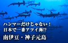 ハンマーだけじゃない! 日本で一番アツイ海!? 南伊豆・神子元島