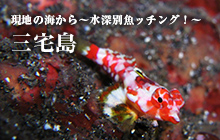 現地の海から~水深別魚ッチング!~ 三宅島