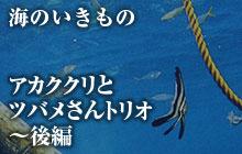海のいきもの