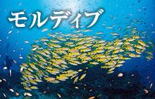 楽園モルディブのダイビング&旅 基本情報