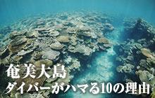 奄美大島 ダイバーがハマる理由10