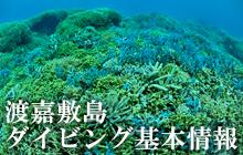 渡嘉敷島ダイビング基本情報