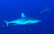 現地の海から~水深別魚ッチング!~ パラオ