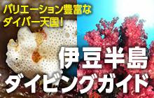 伊豆半島ダイビングガイド