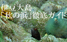伊豆大島:「秋の浜」徹底ガイド