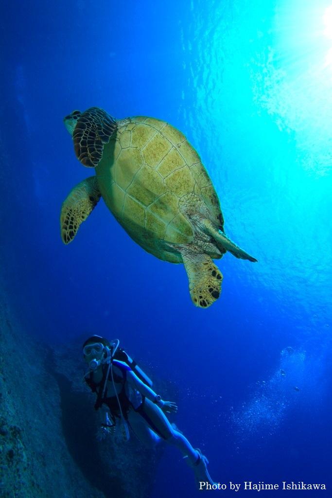 ウミガメとのダイビングが楽しめる「クレバス」。大きく切り込んだドロップオフがダイナミックで、地形派ダイバーにも人気! Photo by Hajime Ishikawa Location is Guam